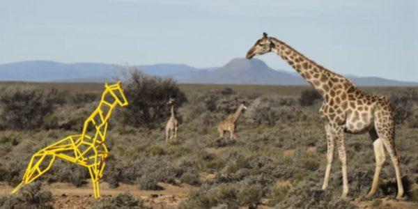 s7 airlines – giraffe