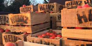 Heinz-Barn g