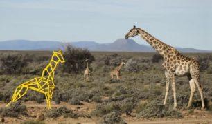 S7 airlines - giraffe